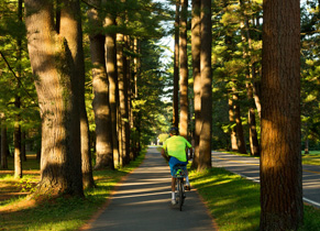 Biker on the Avenue of the Pines