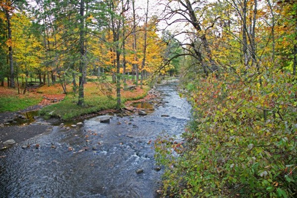 Geyser Creek in Saratoga Spa State Park