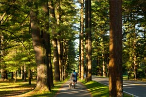 Enjoy a peaceful stroll through Saratoa Spa State Park